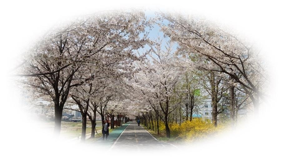 벚꽃이미지.jpg